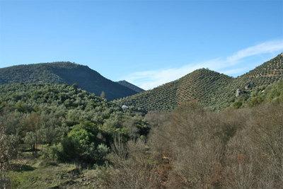 olivar-paisaje