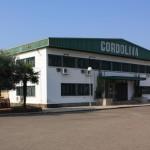 Planta_cordoliva
