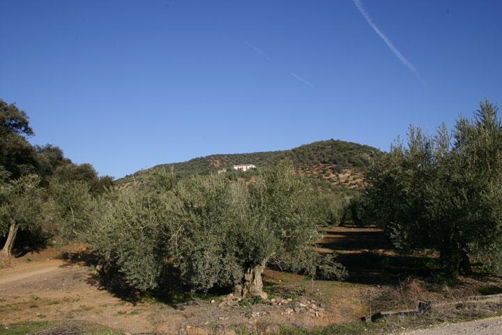 vista olivar montoro